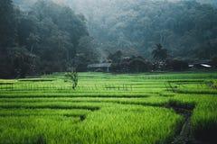 Поле падиа зеленое в деревнях и сельской местности Азии гор стоковая фотография rf