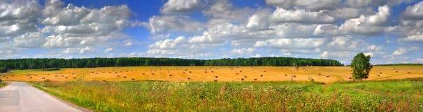 поле панорамный rick Стоковые Изображения