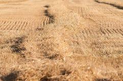 Поле после хлебоуборки Стоковое Фото