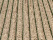 поле предпосылки земледелия Стоковая Фотография RF