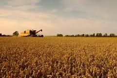 Поле пшеницы, время хлебоуборки. Стоковое Изображение