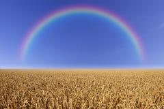 Поле пшеницы с радугой Стоковое Изображение RF