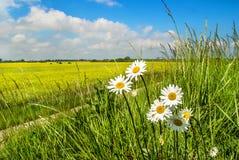 Поле рапса и полевых цветков стоковое фото rf
