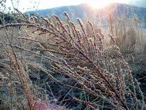 поле рассвета Стоковая Фотография RF