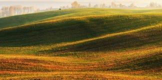 Поле Рассвет осени в поле Тихое утро в живописном поле Стоковые Изображения RF