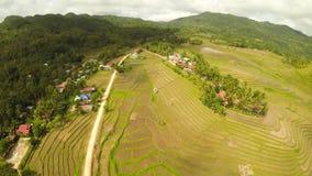 Поле риса вида с воздуха террасное в острове Bohol philippines Красивый филиппинец природы видеоматериал