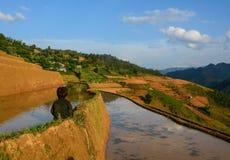 Поле риса в северном Вьетнаме Стоковые Фотографии RF