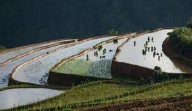 Поле риса в северном Вьетнаме Стоковое Изображение RF