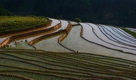 Поле риса в северном Вьетнаме Стоковая Фотография
