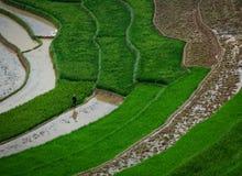 Поле риса в северном Вьетнаме Стоковые Фото