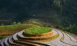 Поле риса в северном Вьетнаме Стоковые Изображения RF