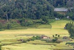 Поле риса в селе Mae Klang Luang, Таиланде Стоковое Изображение