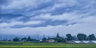 Поле риса в сельской местности в Японии, 08 26 2018 Стоковые Изображения RF