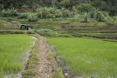 Поле риса и меньшая хата в Вьетнаме Стоковое фото RF