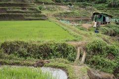 Поле риса и меньшая хата в Вьетнаме Стоковая Фотография