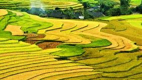 Поле риса на terraced в горе. стоковое изображение rf