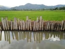 Поле риса с rill стоковое фото