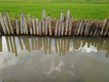 Поле риса с rill стоковые фотографии rf