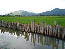 Поле риса с rill стоковые фото