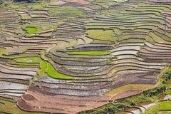 Поле риса террасное стоковая фотография rf