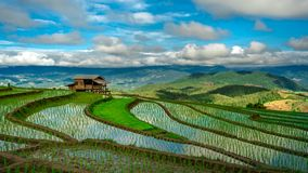 Поле риса террасы коттеджа зеленое с горным видом стоковые изображения