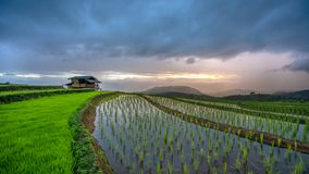 Поле риса террасы коттеджа зеленое с горным видом стоковые изображения rf