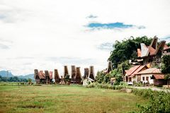 Поле риса, традиционные torajan здания, tongkonans и горы на предпосылке Ландшафт Tana Toraja Сулавеси, Индонезия Стоковые Изображения RF