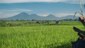 Поле риса Canggu с вулканом Batur держателя в предпосылке видеоматериал