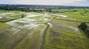 Поле рисовых полей в firld Таиланде земледелия стоковые изображения rf