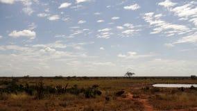 Поле саванны в сезоне лета стоковое фото rf