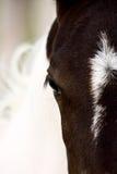 Поле Саскачевана конематки лошади Стоковые Изображения RF