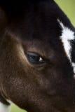 Поле Саскачевана конематки лошади Стоковая Фотография