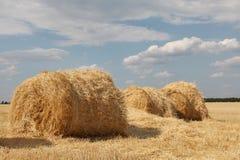 поле свертывает желтый цвет пшеницы Стоковые Изображения RF