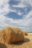 поле свертывает желтый цвет пшеницы Стоковое Фото