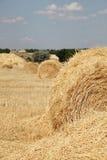 поле свертывает желтый цвет пшеницы Стоковая Фотография RF