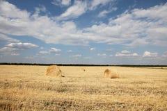 поле свертывает желтый цвет пшеницы Стоковая Фотография