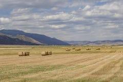 Поле связок сена Стоковые Изображения RF