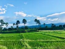 Поле сельского хозяйства стоковое фото rf