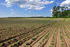 поле сельскохозяйствення угодье Стоковые Изображения