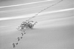 поле снежное Стоковая Фотография