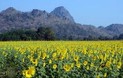 Поле солнцецвета с горой Saraburi Таиландом Стоковая Фотография