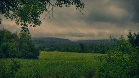 Поле солнцецветов в дождливом дне Стоковое Изображение