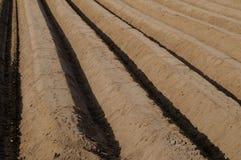 поле спаржи Стоковые Фотографии RF