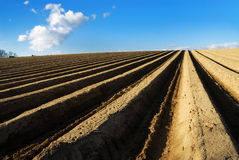 поле спаржи Стоковая Фотография RF