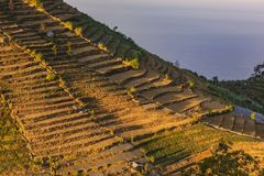 Поле стога фермы картошки и овоща в плато Dieng стоковые фото