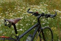 Поле, стоцвет, велосипед, ослабляет, катается на коньках, волочится, катится Стоковые Фото