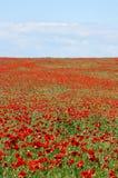 Поле сценарного лета красочное маков и полевых цветков стоковое фото rf