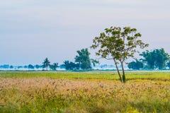 Поле с красивым sky4 стоковые фотографии rf