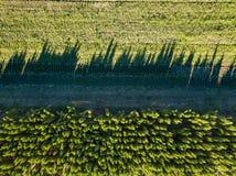 Поле с молодыми деревьями, консервация взгляд сверху фото леса от трутня стоковые изображения