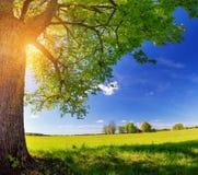 Поле с одуванчиками и голубым небом Стоковое Изображение